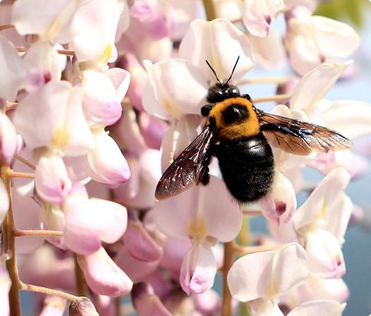蜂 の 種類